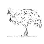 How to Draw a Southern Cassowary