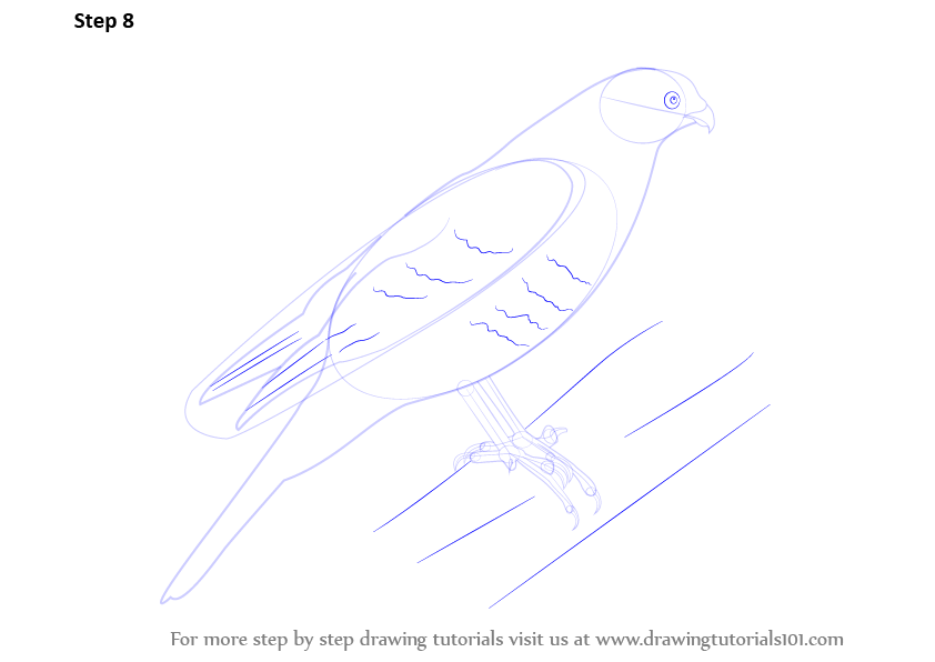 how to draw a sparrow step by step for kids