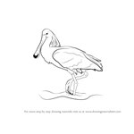 How to Draw a Spoonbill