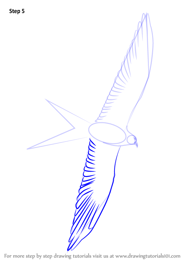 learn how to draw a swallow