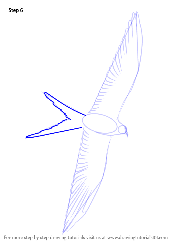 Learn How To Draw A Swallow Tailed Kite Birds Step By