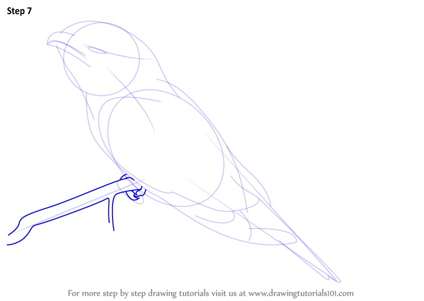how to draw birds on a tree