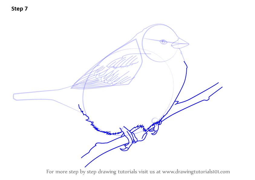 Learn How to Draw a Tree Sparrow (Birds) Step by Step ...