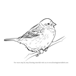 How to Draw a Tree Sparrow