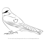 How to Draw a Tree Swallow