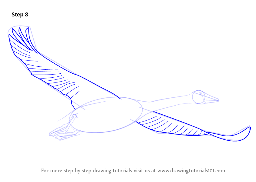 Aninimal Book: Learn How to Draw Trumpeter Swan in Flight (Birds) Step by ...