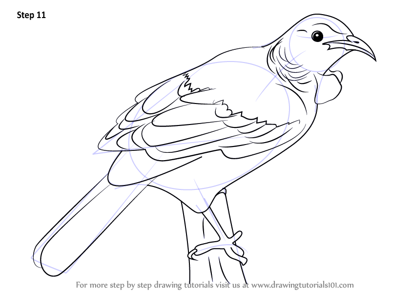 how to draw a pigeon bird step by step