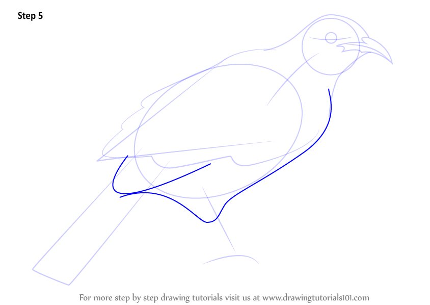 Step by Step How to Draw a Tui
