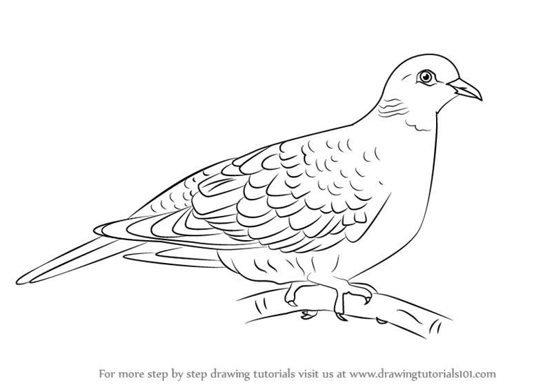 learn how to draw a turtle dove birds step by step drawing tutorials