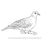 How to Draw a Turtle Dove