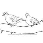 How to Draw Turtledoves