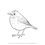 How to Draw a Veery