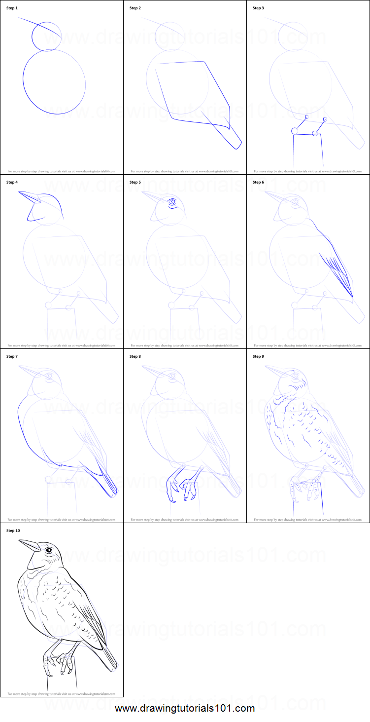 How To Draw A Western Meadowlark Printable Step By Step
