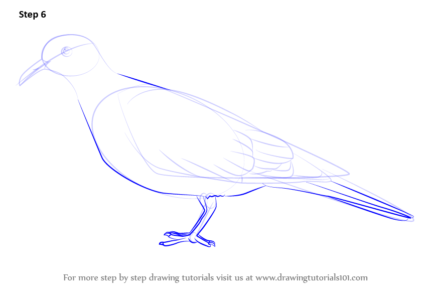 Learn How To Draw A White Winged Dove Birds Step By Step Drawing