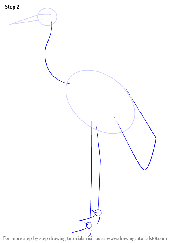 Step by step how to draw a whooping crane for How to draw a crane step by step