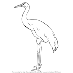 How to Draw a Whooping crane