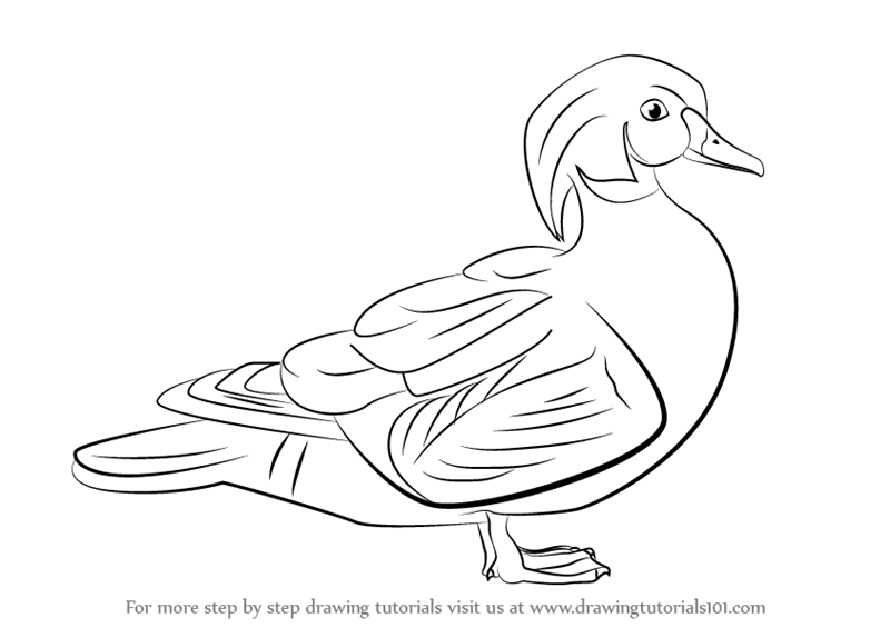 learn how to draw a wood duck birds step by step drawing tutorials