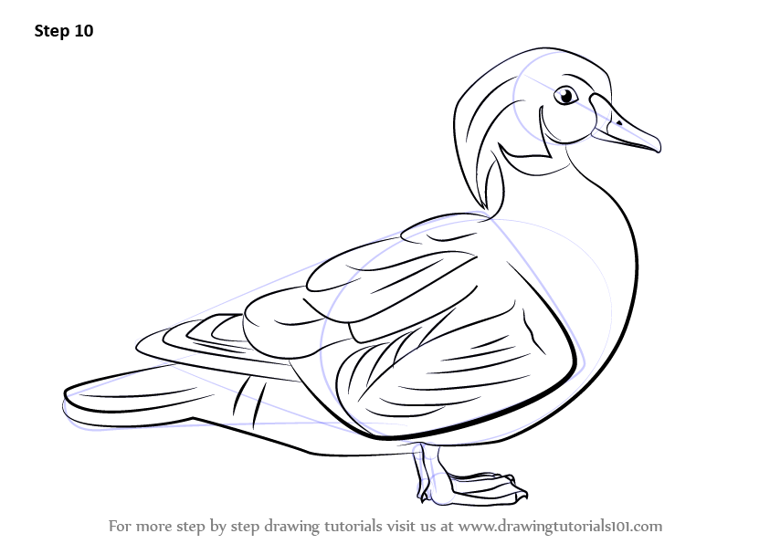 Learn How To Draw A Wood Duck Birds Step By Step