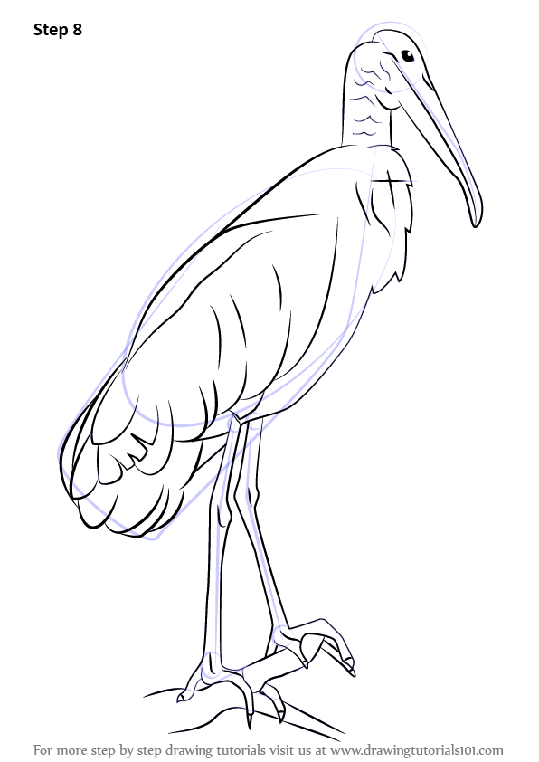 Learn How to Draw a Wood Stork