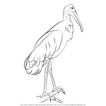 How to Draw a Wood Stork