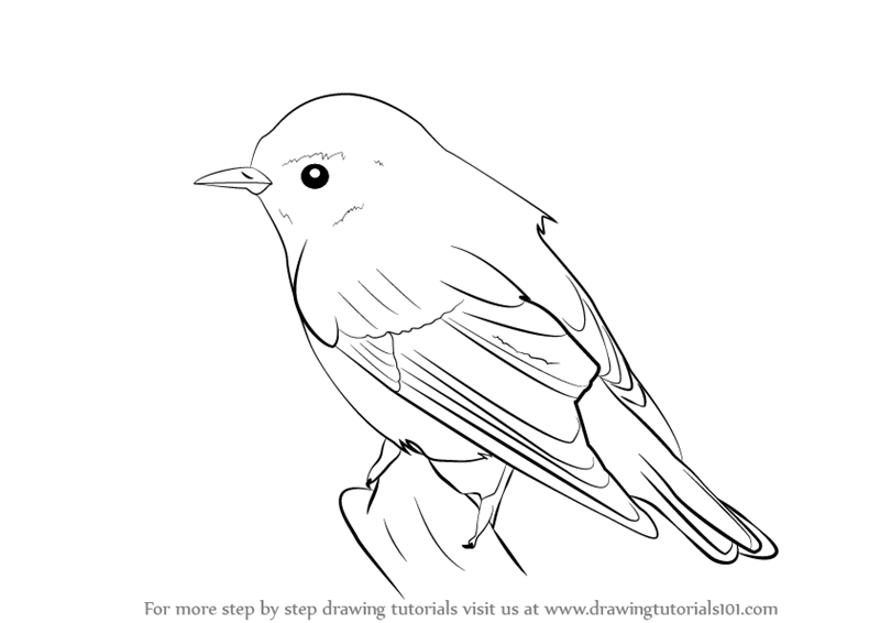 how to draw a bird on a tree