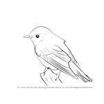 How to Draw a Wood Warbler