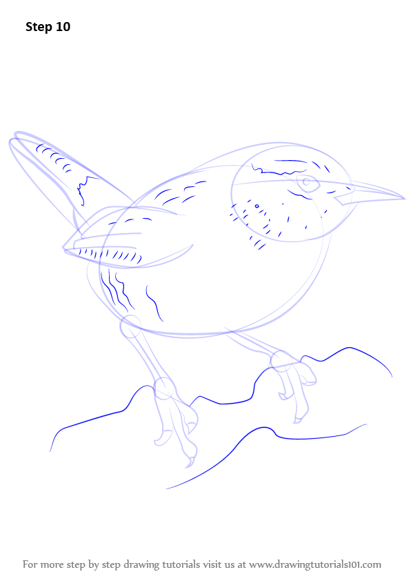 Learn How To Draw A Wren Birds Step By Step Drawing