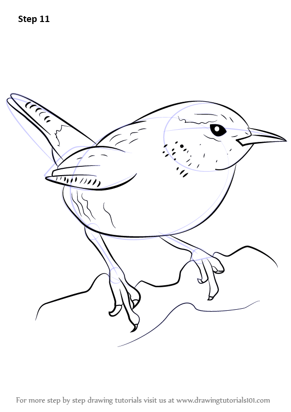Line Drawing How To : Learn how to draw a wren birds step by drawing