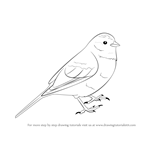 How to Draw a Yellowhammer