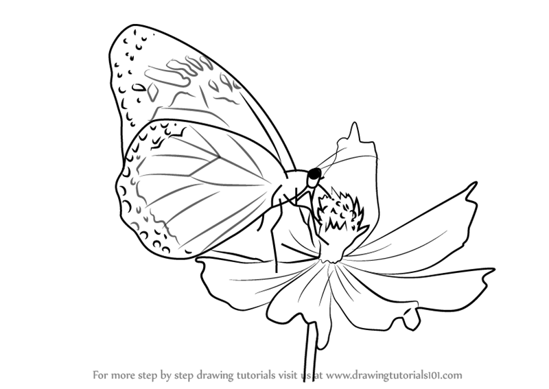 Learn how to draw a butterfly on flower butterflies step by step drawing tutorials