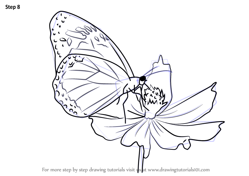 Step by Step How to Draw a Butterfly on Flower ...