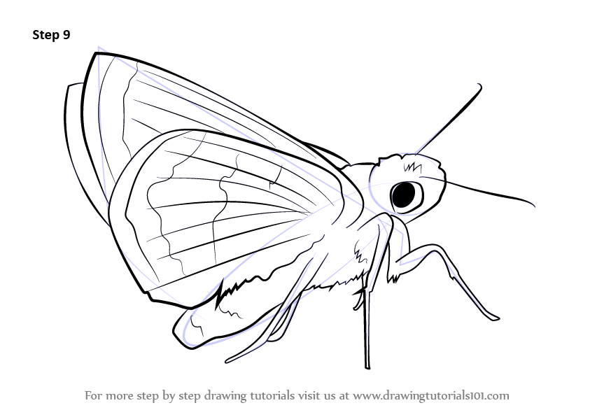 Learn How To Draw A Malachite Butterflies Step By Step