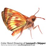 How to Draw a Leonard's Skipper