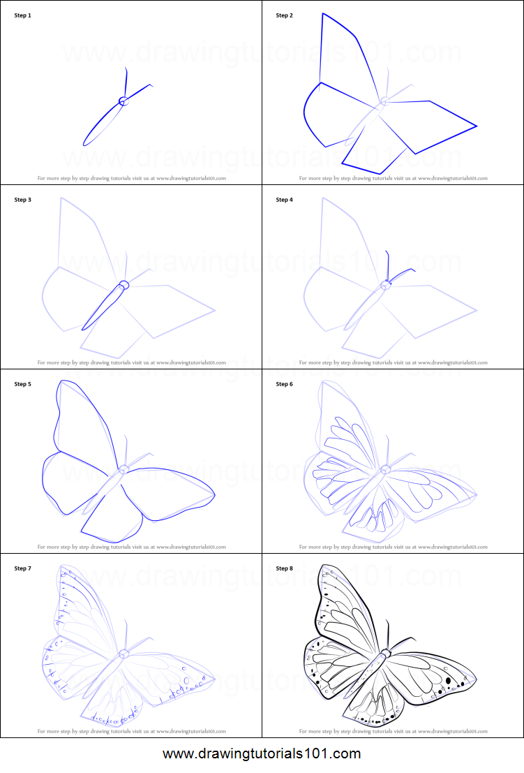 How to Draw a Monarch Butterfly printable step by step ...