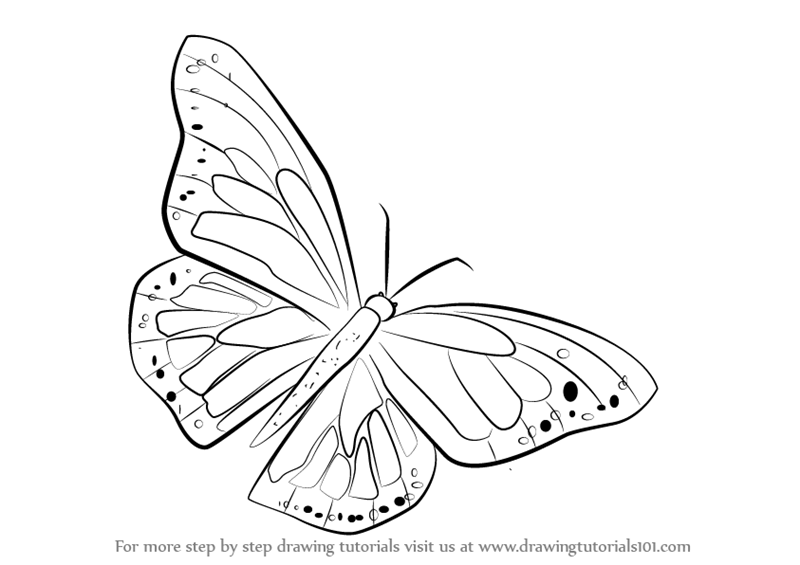 Learn how to draw a monarch butterfly butterflies step by step drawing tutorials