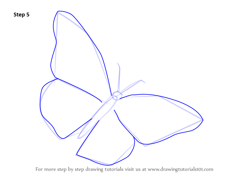 Learn how to draw a monarch butterfly butterflies step for How to make a butterfly drawing