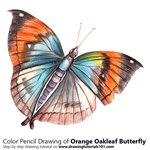 How to Draw an Orange Oakleaf Butterfly