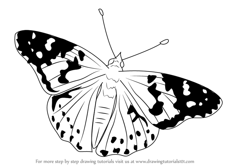 coloring pages painted lady butterfly | Learn How to Draw a Painted Lady (Butterflies) Step by ...