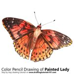 How to Draw a Painted Lady