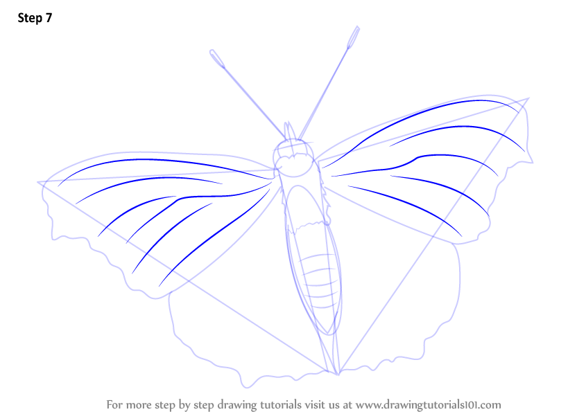 Learn How to Draw a Peacock Butterfly (Butterflies) Step by Step ... Peacock Pattern Outline