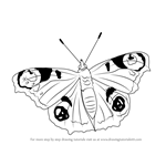 How to Draw a Peacock Butterfly