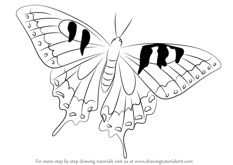 learn how to draw a swallowtail butterfly butterflies step by step