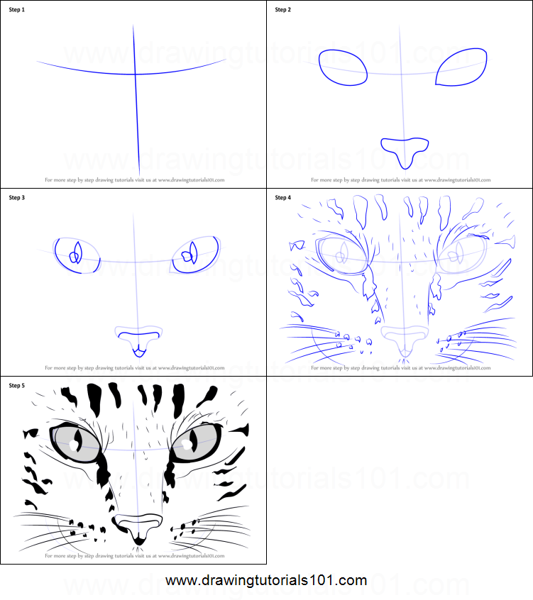 How To Draw Cat Eyes Printable Step By Step Drawing Sheet