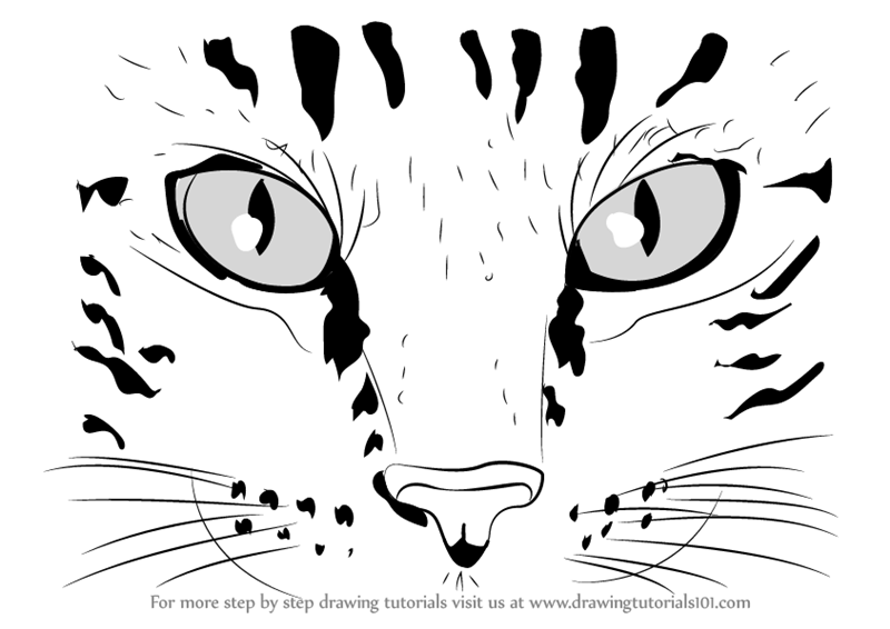 Learn how to draw cat eyes cats step by step drawing tutorials