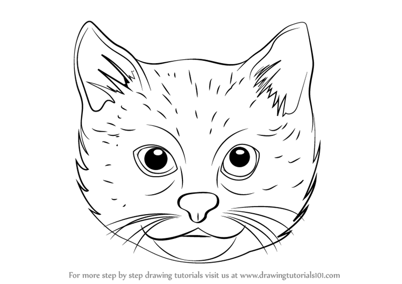Line Drawing Animal Face : Learn how to draw a cat face cats step by drawing