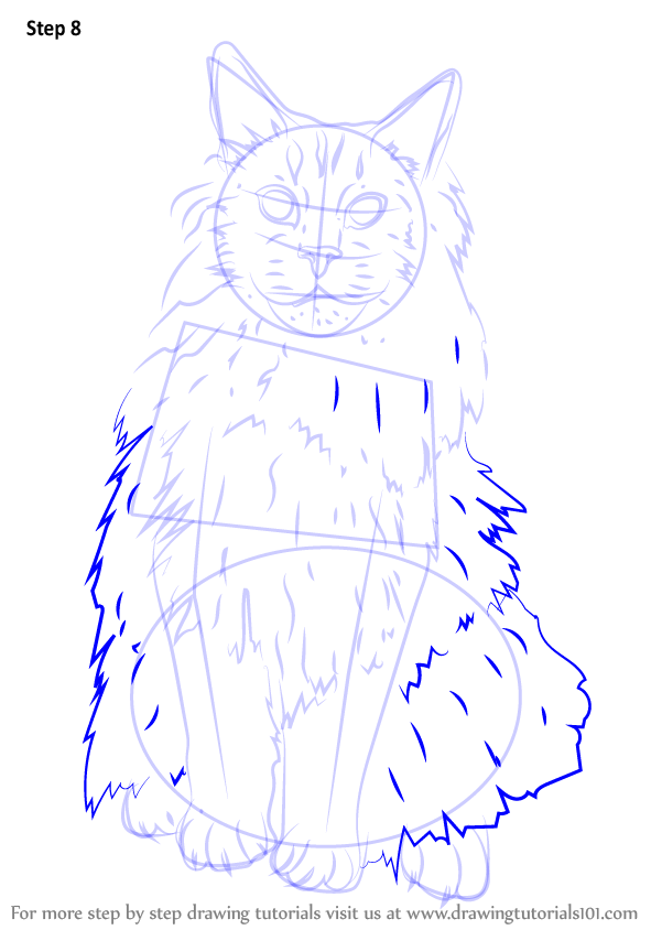 Learn How To Draw A Maine Coon Cats Step By Step