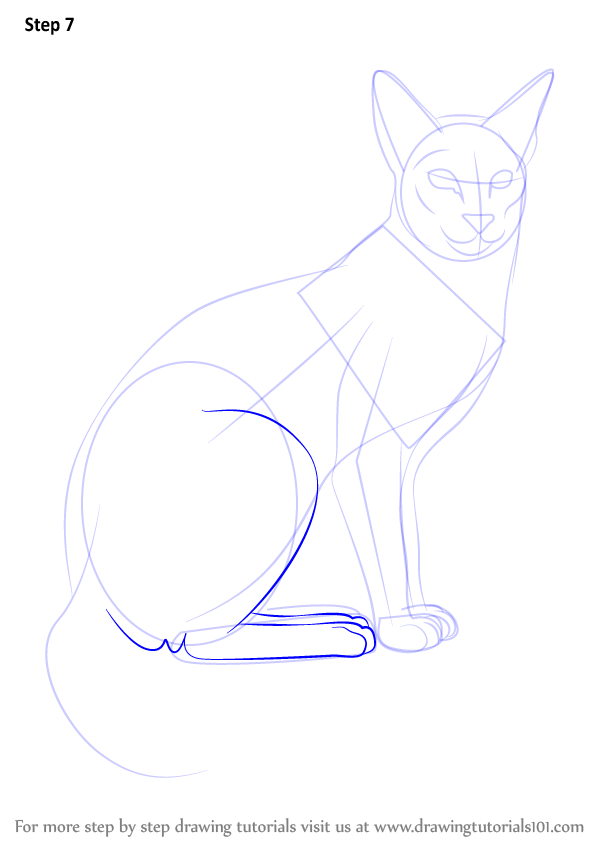 Learn How To Draw A Siamese Cat Cats Step By Step