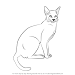 How to Draw a Siamese Cat