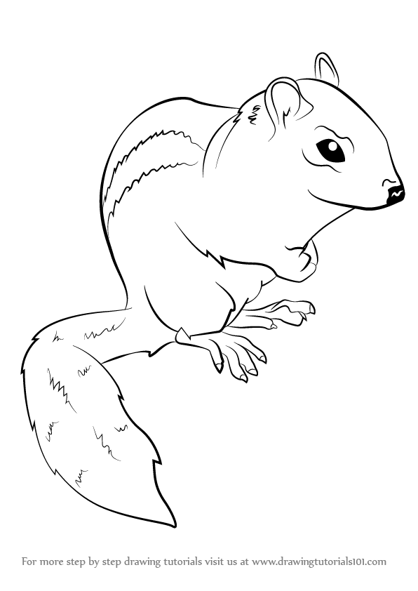 learn how to draw an eastern chipmunk chipmunks step by step drawing tutorials