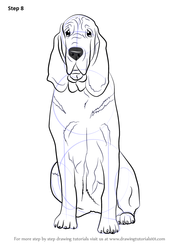 Learn How to Draw a Bloodhound